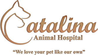 Catalina Animal Hospital, LLC